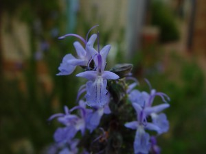 small, purple, orchid, flowers
