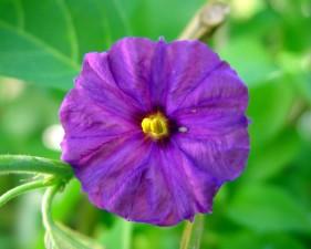Paragvaj, noć, hlad, cvijet, lisne uši