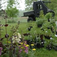 plants, flowers, pots