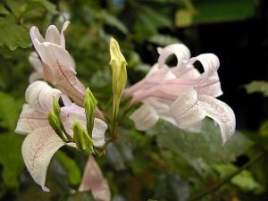 plants, flowers