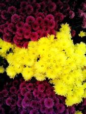 púrpura, flores amarillas, arreglo