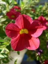 red flower, grass