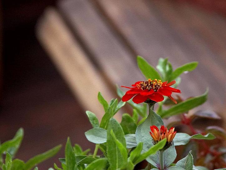 fleur rouge, ville