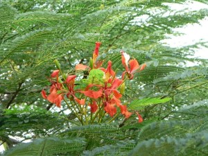 rouges, arbre, fleurs