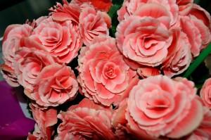 csokor, rózsaszín, rózsák, virágok