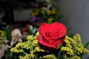 bouquet, rouge, roses, fleurs, fleurs sauvages, fleur, floraison