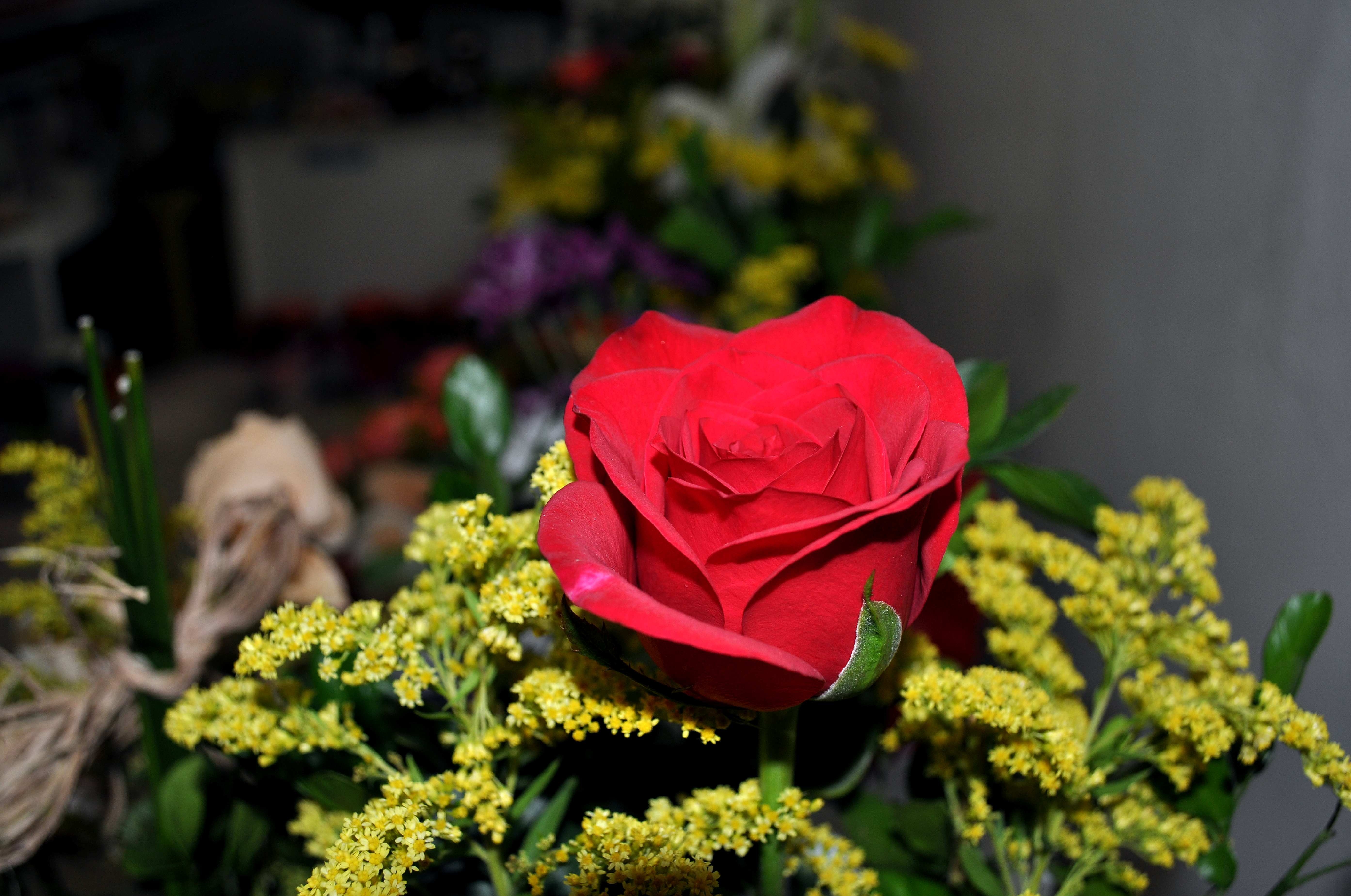 Free photograph; bouquet, single, rose, flowers