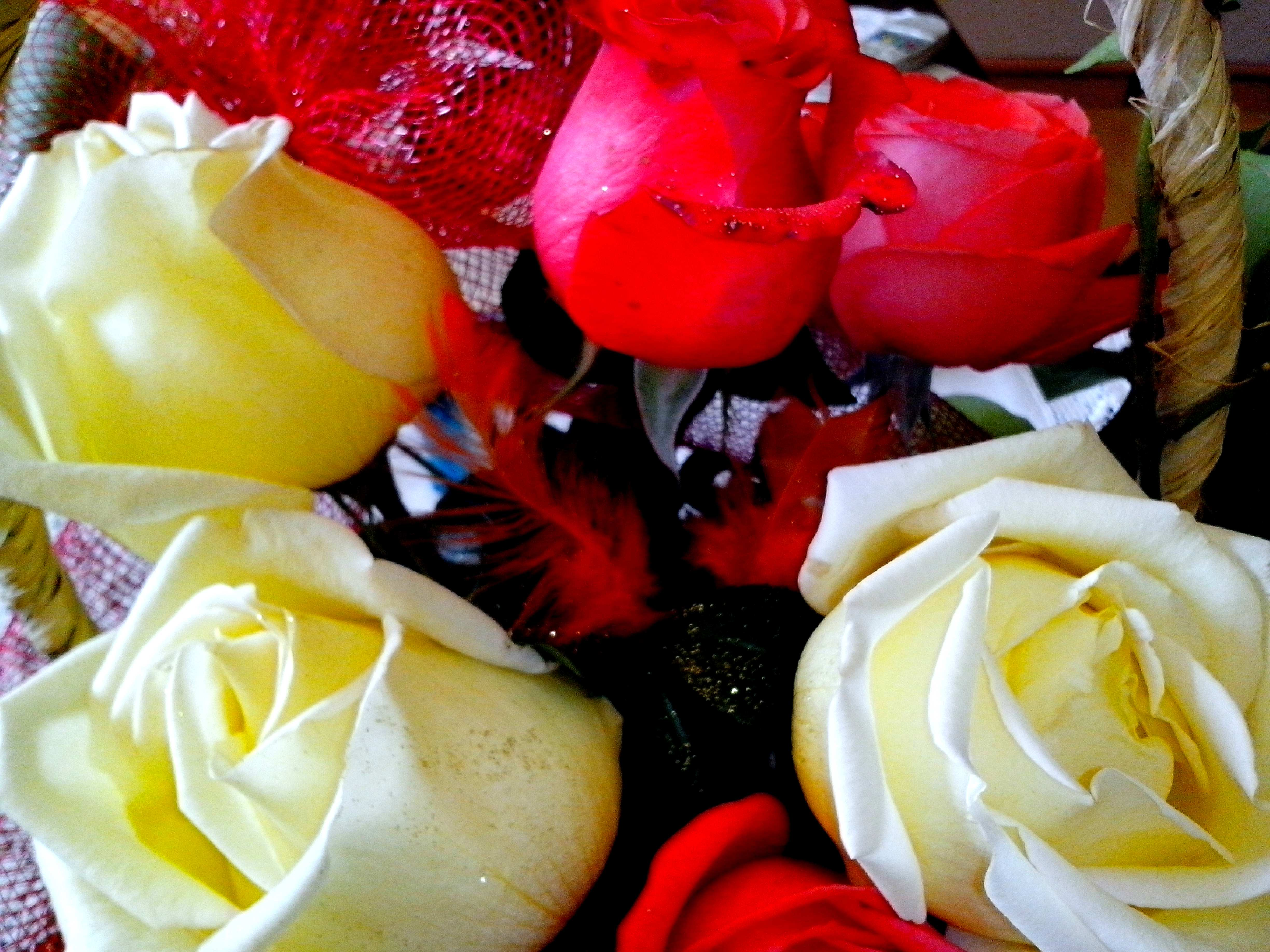 Free photograph; yellow, red, roses, arranged, bouquet