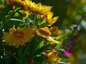 plusieurs, fleurs jaunes, herbe