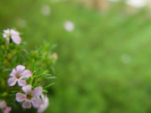 ขนาดเล็ก ดอกไม้ ล่าง ไฟเขียว พื้นหลัง