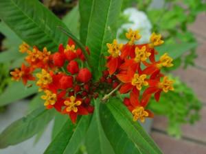 small, orange, red flowers