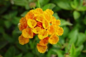 small, orange flowers