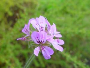 small, purple flower