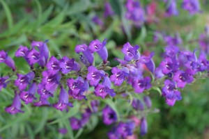 small, purple flowers
