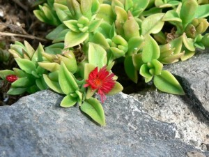small, red flower