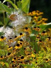 small, yellow, black, flowers, grass