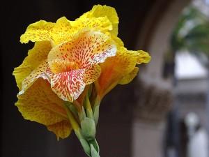 tacheté, fleur jaune