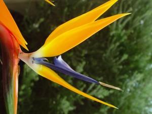 STERLİÇYA, kuş, cennet, çiçek, karıncalar