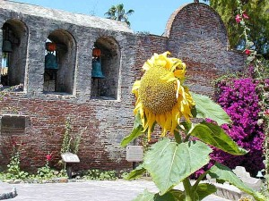 mission, capistrano, church, bells, walls, sunflowers, arches