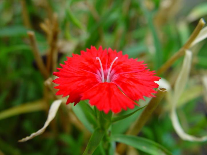 Alien Hiding Bright Red Flower