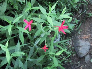 three, small, pink flowers