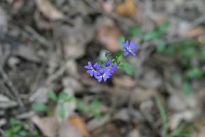 작은, 푸른 꽃, 건조 하 고, 잎이, 배경