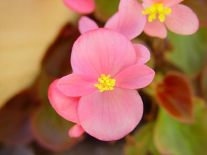 tiny, bright pink, yellow flowers
