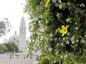 кули, цветя, растения, куполи