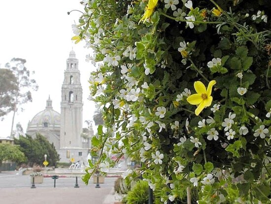 towers, flowers, plants, domes