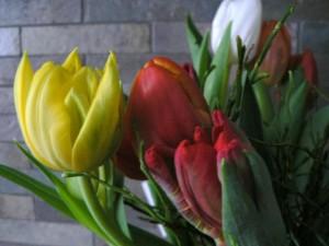 farbenfrohes, Tulpen, Blumen, Frühling