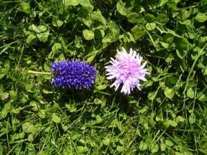 dos, flores