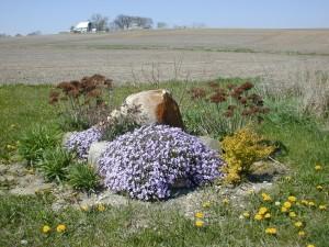 fialová, kvety, predné, rock
