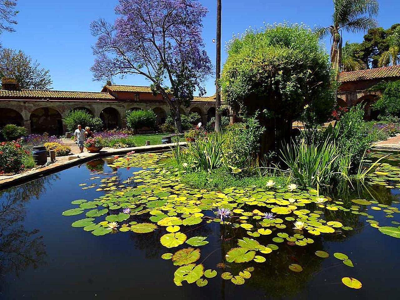 Free picture lilly lotus flower pond lilly lotus flower pond izmirmasajfo