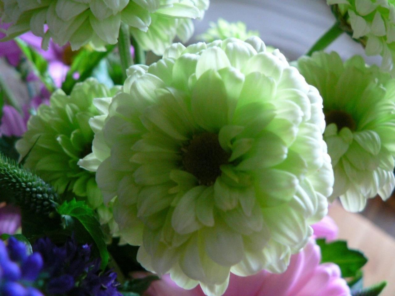Free Picture White Green Flower