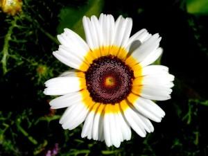 flor blanca, floración, jardín