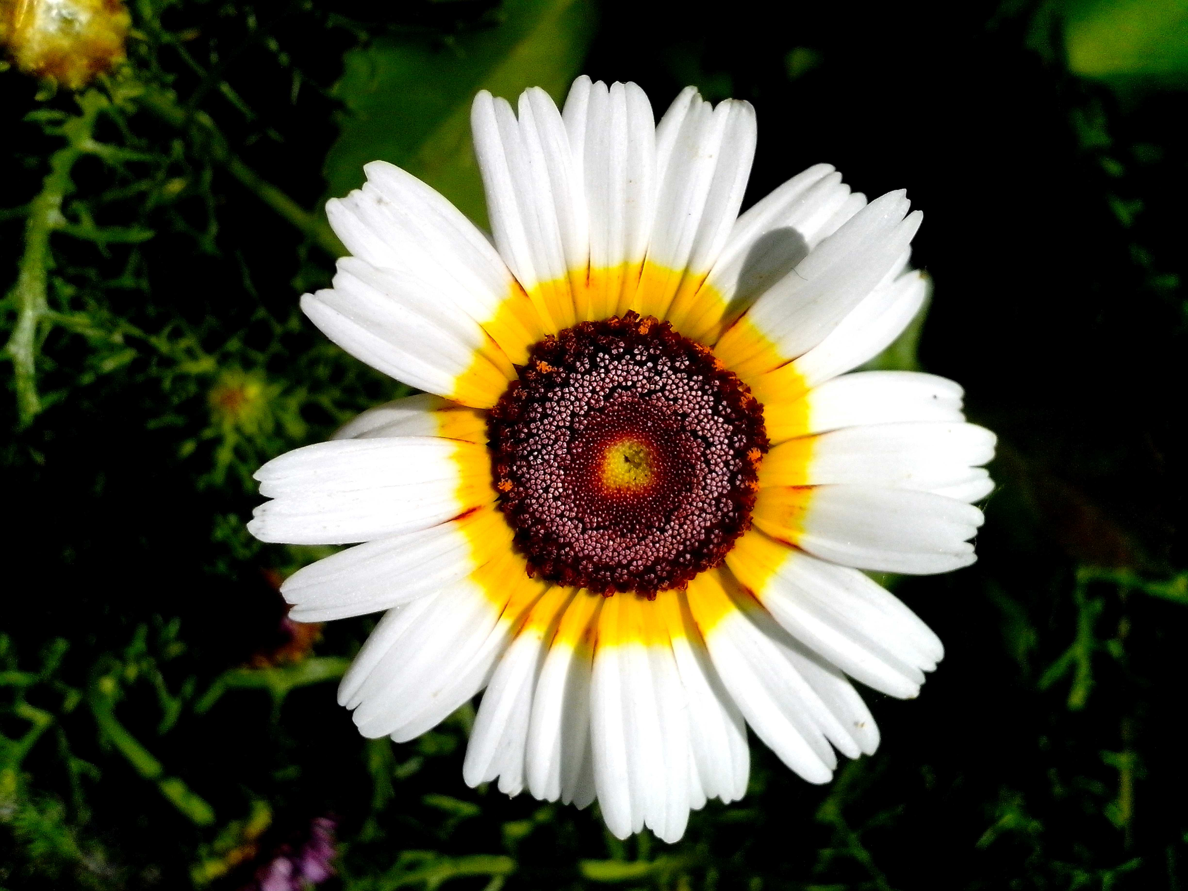 Free Picture White Flower Blooming Garden