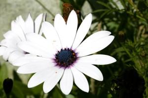 white flower, black, core