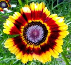 bright, orange flower, blooming, close