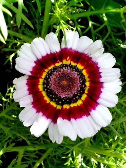 flower, full, bloom