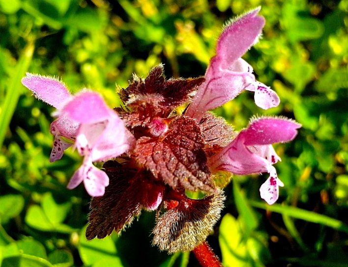 honey, wild, flowers