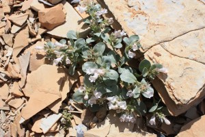 plant, flowering, stones