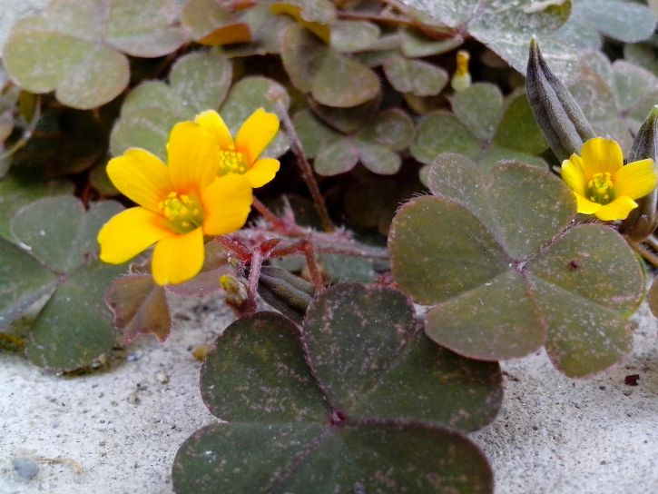 small, yellow, flowers