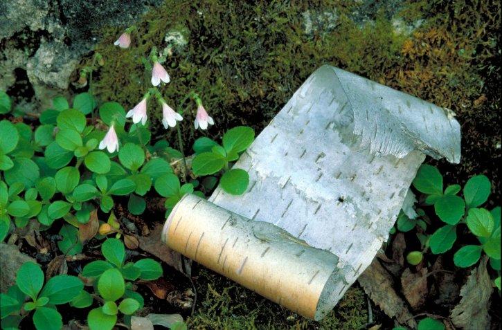 Kostenlose Bild: winzig, Nicken, rosa, weiß, blüten, wachsen, Moos ...