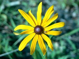 yellow flower, up-close, green grass, background
