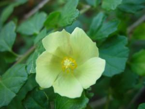 fleur jaune, foncé, feuilles vertes
