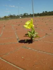 fleur jaune, de plus en plus