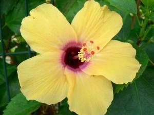 fleur jaune, peu, rouge