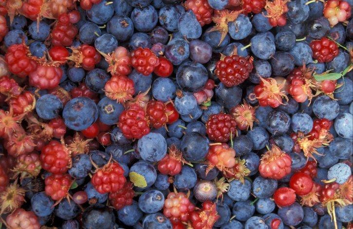 alaska, wild, berries