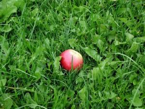 pomme, vert, herbe