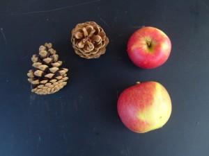 apple, pine, cone